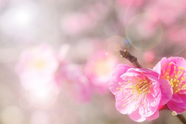 春は財布の時期