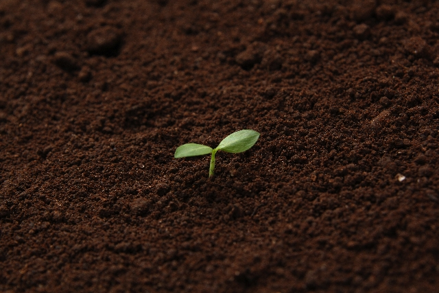 土は金を生じる