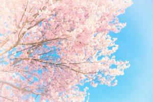 春財布の季節