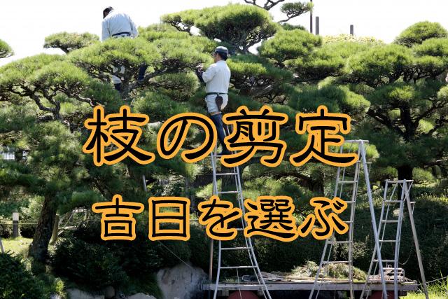 枝の剪定の吉日の選び方